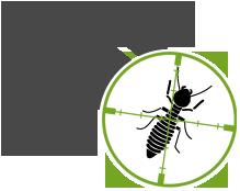 organic Termite Pest Control Cary