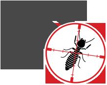 Termite Control Cary
