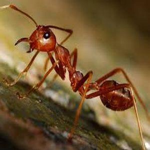 ant control in Alexandria